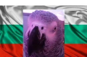 Жоро папагал