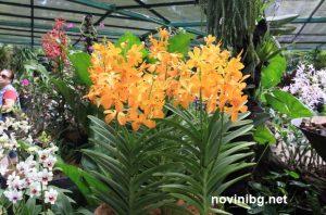 орхидеи адаптиране