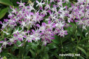 поливане на орхидеята