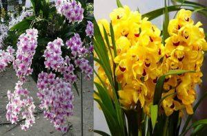 орхидеи плантация