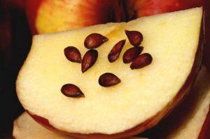 семки от ябълки