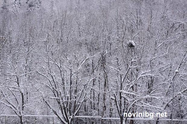 студ сняг