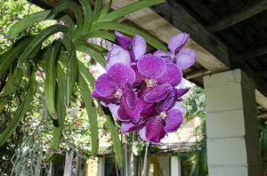 орхидея кошница