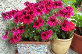 цветя торене