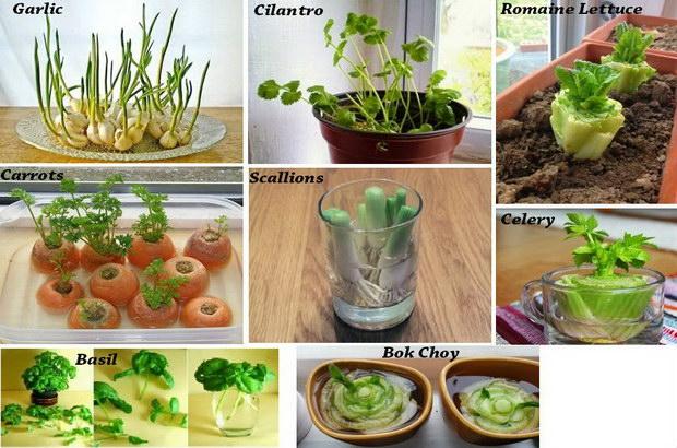 зеленчуци и подправки