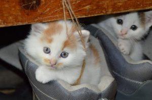 котка поведение