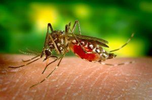 комари лято