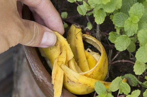 кората на банана