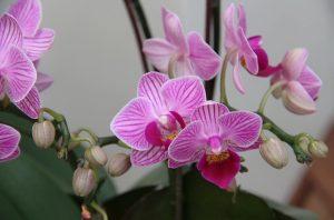 орхидеи съвети