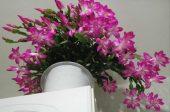 цветя подправка