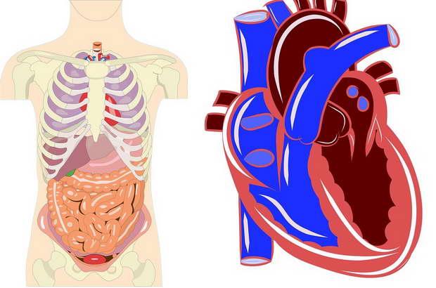 сърце и лош холестерол