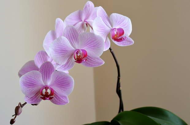 домашен тор за орхидеи